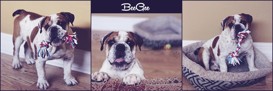 beegee-puppy-board-blue