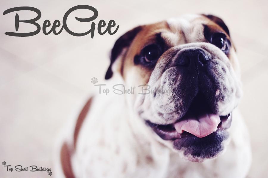 BeeGee Headshot