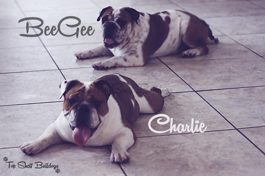BeeGee and Charlie