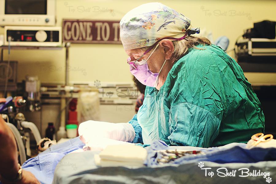 dr-vet-surgery-tsb