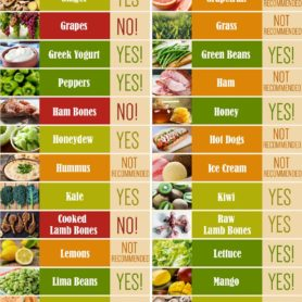 Foods Not For Dogs